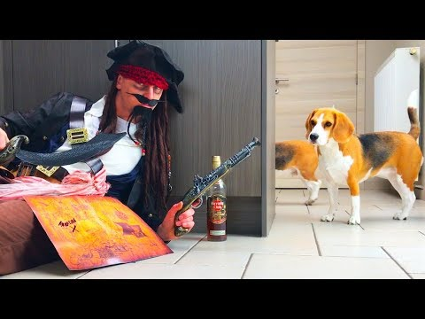 Funny Dogs Vs Jack Sparrow Prank : Louie & Marie The Beagles | Part 1