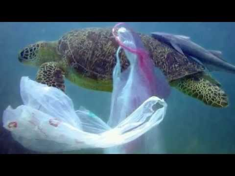 Shocking animal autopsy pictures show how plastic bags kill sea turtles