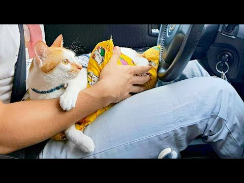 My CAT is the best DRIVER   VERY CALM & CHARMING! 🚗