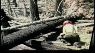Wildland Fire Chain Saws - Part 4 - Bucking: Blow Down