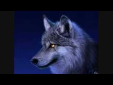 Banda lobo para que no me olvides youtube - Para que no me olvides ...
