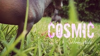 Cosmic Armistice Trailer 1#  Model Schleich Horse Series *Discontinued*