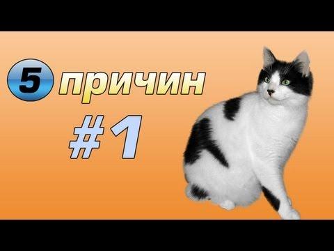 Пять причин #1 - Почему стоит держать дома кота | Только на ДноTV