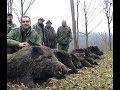 Wild boar hunting - Serbia - Vojvodina -  Lov divlje svinje - Srbija