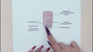 ЭТО ДОЛЖЕН ЗНАТЬ КАЖДЫЙ МАСТЕР МАНИКЮРА! Строение ногтя