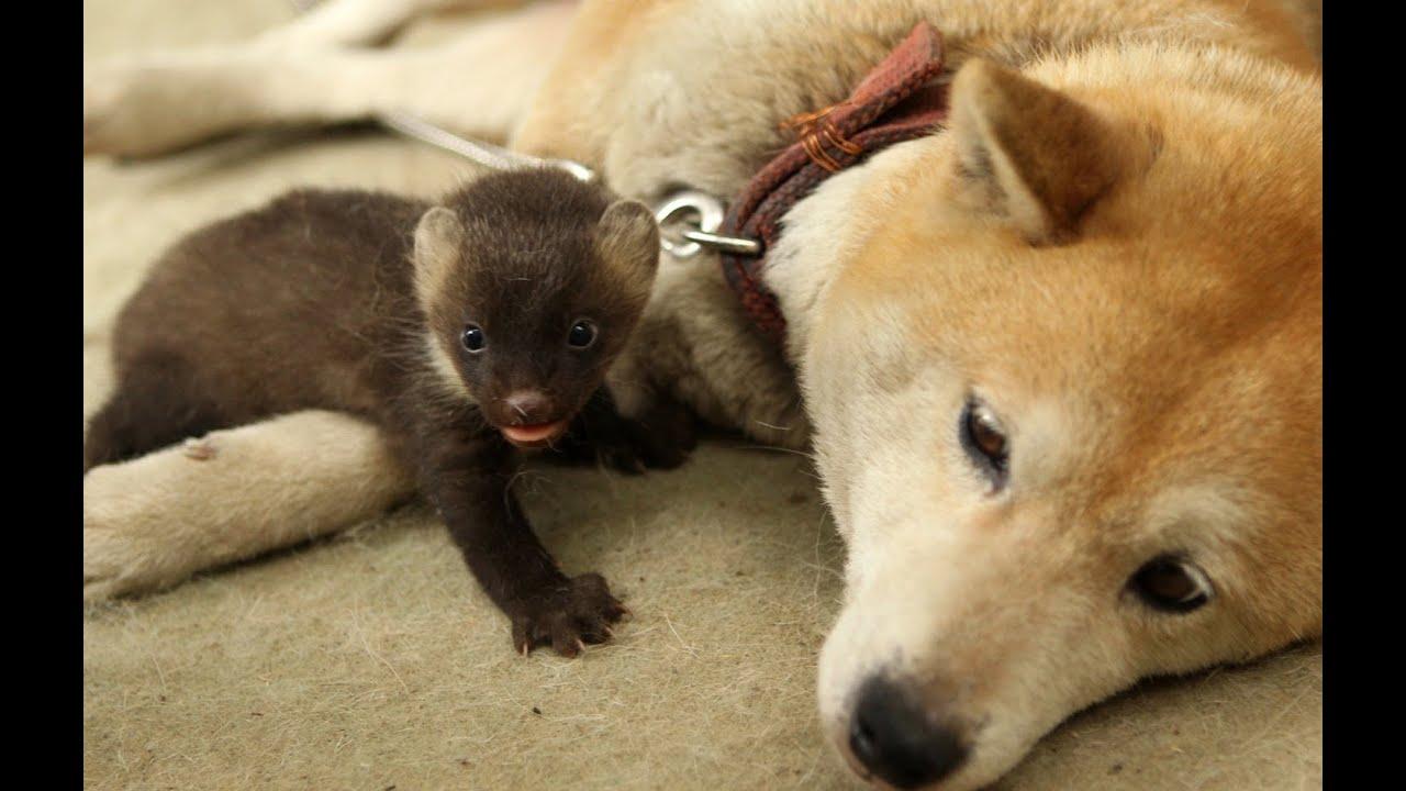犬が母のテン