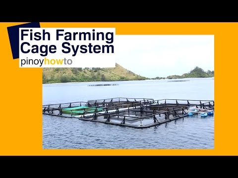 Fish Farming: Fish Farming Cage Systems | Pinoy How To