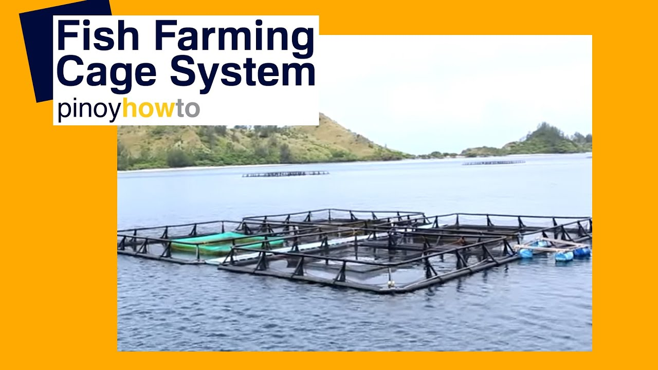 Fish farming fish farming cage systems pinoy how to for What is fish farming