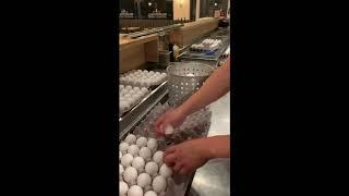 World's Largest Hard-Boiled Egg Testing
