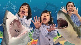 상어가 나타났다! 상어 잡으로 플레이아쿠아리움 부천~ 샤크어택 씨워크 상어체험 상어잡기 아기상어 웅진플레이도시 플레이아쿠아리움 부천 수족관 Shark is coming