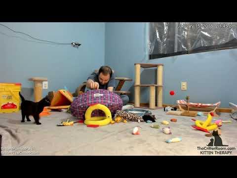 Mew Year's Kittens - Minion Bedtime Visit 2018-01-15