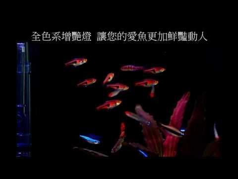 ISTA伊士達 全色系-全白燈 3尺 IL-413-W
