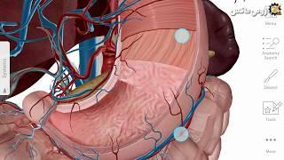 تحميل العملاق Human Anatomy Atlas 2019 لتشريح الجسم البشري