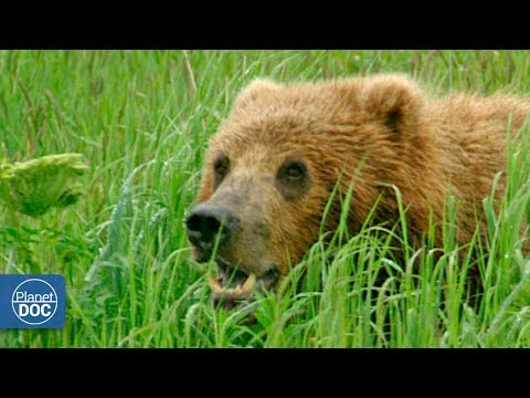 Wild Alaska- Full Documentary