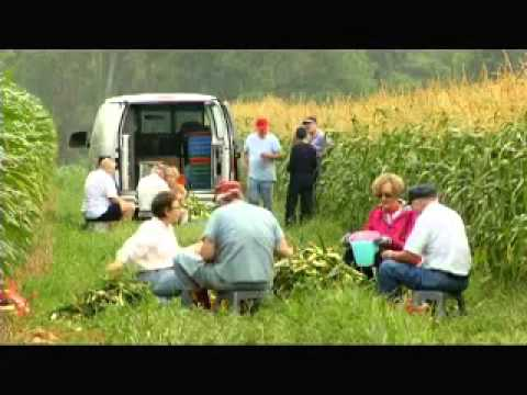 Gleaning Apples in Winchester, Virginia