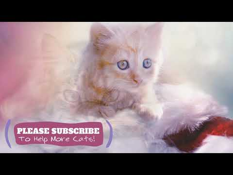 Calming Music for Cats - 2 Hours Cat Sleep Music New 2019 ☯LCZ35