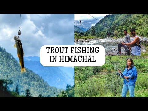 Best Place To Do Trout Fishing In India