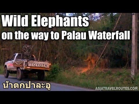 Wild Elephants on the way to Palau Waterfall อุทยานแห่งชาติแก่งกระจาน