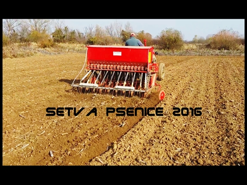 Setva Psenice 2016 Crljenac
