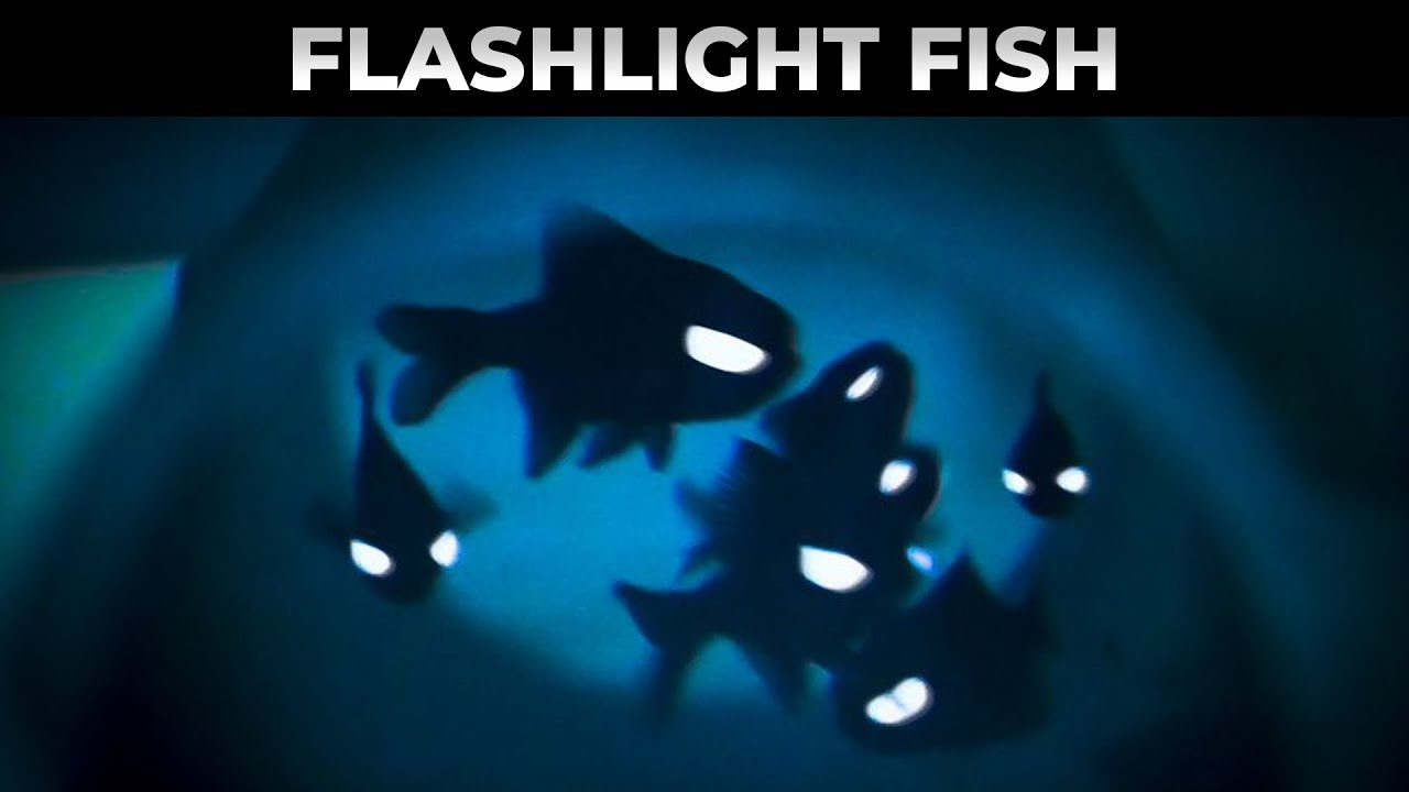 6 Bioluminescent Organisms that Almost Look Unreal