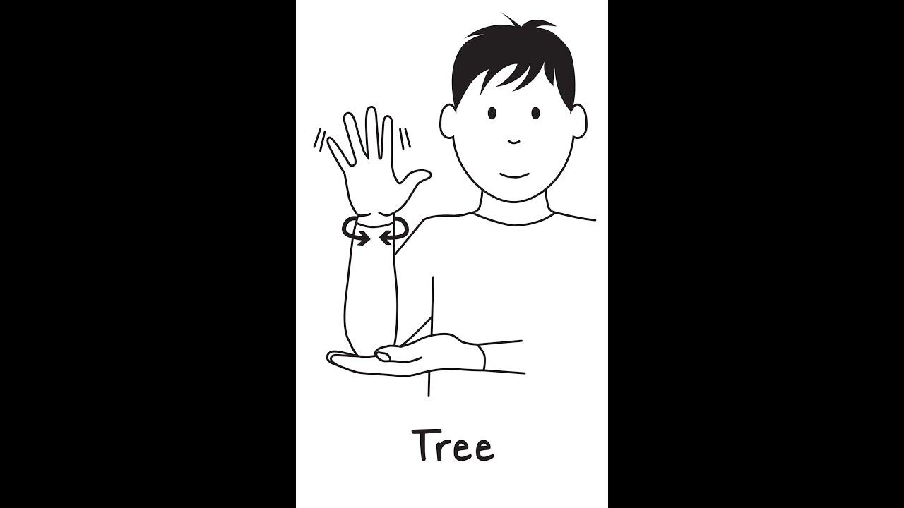 Image result for asl tree