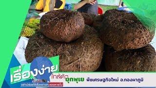 บุกพุเย พืชเศรษฐกิจใหม่ อ.ทองผาภูมิ (24 ธ.ค.62) เรื่องง่ายใกล้ตัว | 9 MCOT HD