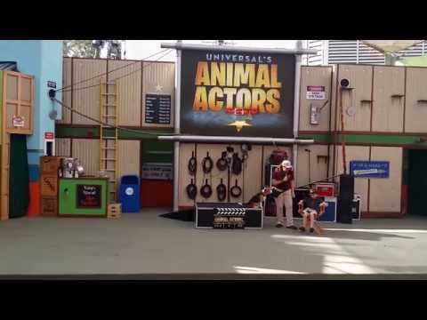 Universal Studios Animal Actors Show! July 18th 2014 Full HD!
