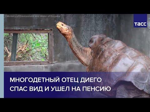 Вопрос: Чем опасна для человека галапагосская черепаха?