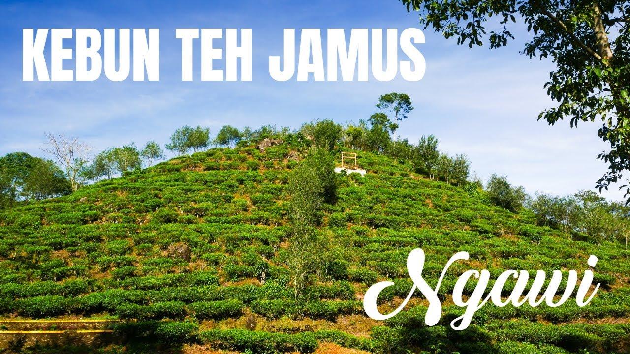 Gambar Kebun Teh Jamus Ngawi Kebun Teh Jamus Jamus Tea Plantation Sumber Lanang Water Springs Youtube