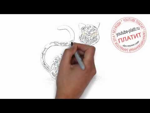 Картинки кошек нарисованные  Как нарисовать карандашом кошку поэтапно за 29 секунд