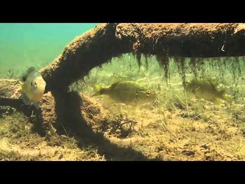 Underwater Video of Mangan Mine Pit lake Brainerd MN Brainerd Dispatch