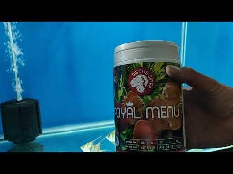 Rio Orinoco Altum Angel Fish (tank Raised) Feeding Royal Menu Large Granules By Discus Siner