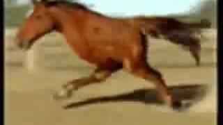 Retarted Horse Running