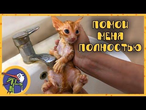 Видео приколы с кошками онлайн.