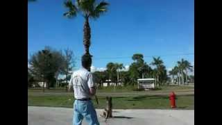 Training A German Shepherd Puppy,part 1 Video