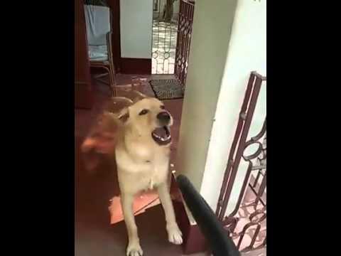dog giving blowjob