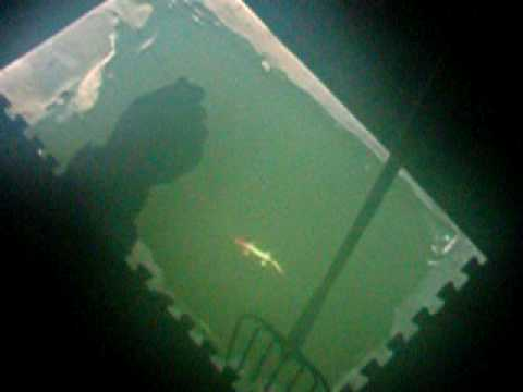 Spear fishing in the dark house youtube for Spear house blueprints