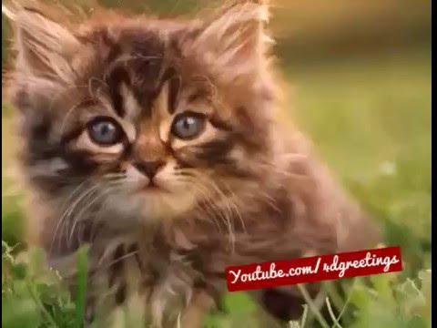 adorable gato cantando feliz cumplea�os
