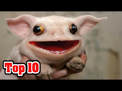 Top 10 CREATURES You Didn't Know EXISTED