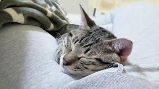 朝、目が覚めると猫が足の隙間でイビキをかいて寝てました