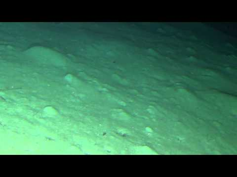 our max depth-2100 feet under the sea, a completely different world (March 14th, 2014)