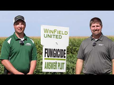 Fungicides - How it Can Help Your Farming Operations
