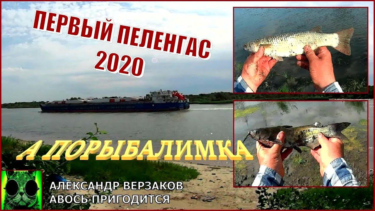 А порыбалимка 8/20. Первый пеленгас 2020.