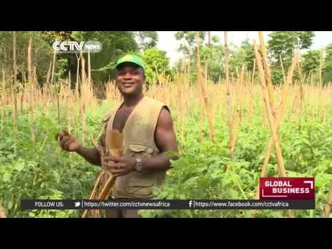 Sao Tome farmers turn to veggies as cocoa production drops