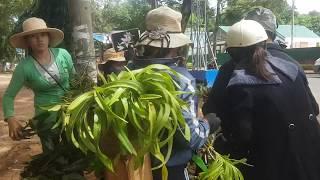 Chợ lan rừng giá rẻ do người đồng bào Ê Đê bán tại Buôn Ma Thuột
