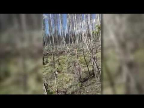 Video: Elk charges tourist at Yellowstone National Park