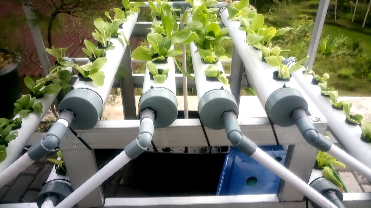 hydroponics growing system homemade youtube. Black Bedroom Furniture Sets. Home Design Ideas