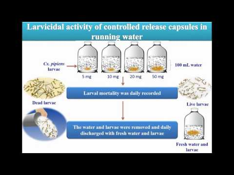 Toxicity larvicides released from chitosan capsules against C. pipiens Video abstract 108881