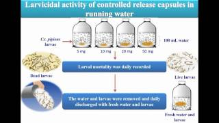 Toxicity larvicides released from chitosan capsules against C. pipiens - Video abstract 108881
