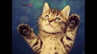 Кот # 3 (Трехцветные) *Которайм*